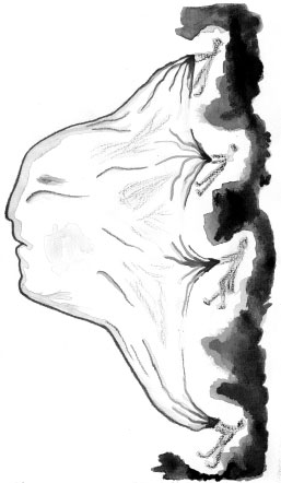 martha-angelica-perez5.jpg