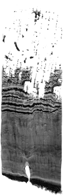 castaneda-lobsang01.jpg